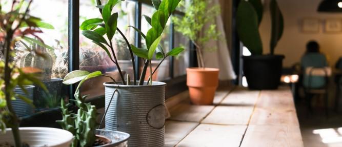 Des plantes dans votre cuisine, et pourquoi pas ?