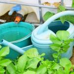Recycler l'eau de pluie chez soi