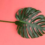 Décoration : quelles plantes pour votre intérieur?