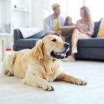 Construire pour bien vivre avec son chien
